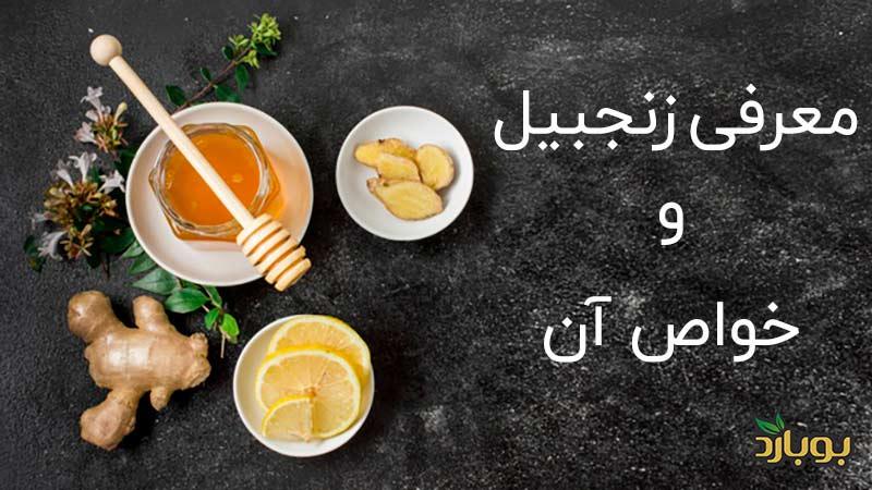 معرفی زنجبیل و خواص آن-Introducing ginger and its properties