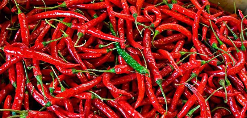 فلفل قرمز دارای مزاج گرم و خشک